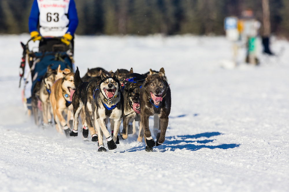 Musher Katherine Keith competing in the 42nd Iditarod Trail Sled Dog Race on Long Lake after leaving the restart on Willow Lake in Southcentral Alaska.  Afternoon. Winter.