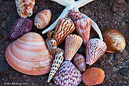Sea shells along the Gulf of Californai near Loreto Mexico