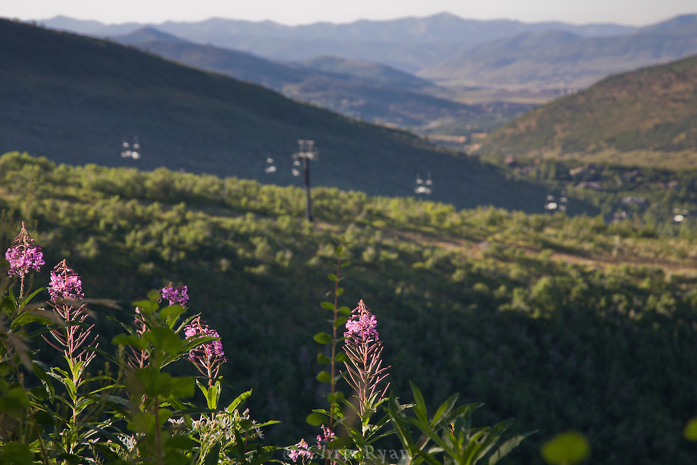Pink fireweed framing chairlift outside Park City, Utah