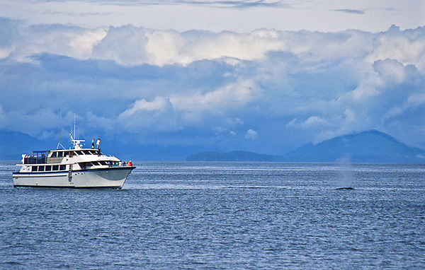 Tourist observe and photograph Humpback Whales in Fredrick Sound,  Southeast alaska.