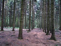 CZECH REPUBLIC VYSOCINA NEDVEZI 23JUL11 - Pansky les forest landscape near the village of Nedvezi and the town of Bystre in Vysocina, Czech Republic.....jre/Photo by Jiri Rezac....© Jiri Rezac 2011
