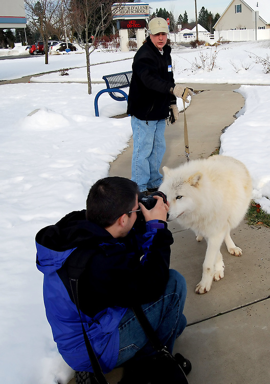 An artic wolf inspects the Jerome Pollos' camera as he takes pictures during a environmental science class Dec. 7 at Coeur d'Alene High.