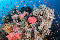 A densely packed Coral Reef, teeming with life<br /> <br /> Shot in Indonesia