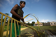 Making a bed from palm leaves at Sawre Muybu, a Munduruku indigenous village on the Tapajos River, Para, Brazil.