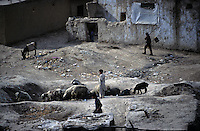 KABUL, shepherds let the animal to graze the field in Jada' district.