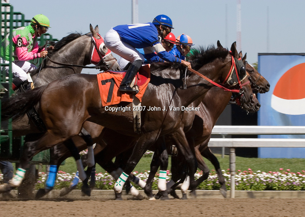 Thoroughbred horses breaking from the starting gate