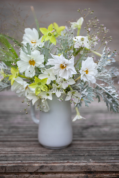 Flower arrangement with Cosmos bipinnatus 'Fizzy White' and 'Psyche Mix', Nicotiana 'Nicki's White' and 'Nicki's Lime', Helichrysum italicum, Panicum elegans 'Sprinkles' and Gypsophila pacifica