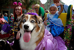 27 Jan 2013. New Orleans, Louisiana USA. .The Mystic Krewe of Barkus. Nylah Martin (3 yrs) with Zoe the dog. Following the theme 'Here Comes Honey Bow Wow,' the parade parodies a popular media title as dogs and their owners parade through the French Quarter in one of the most irreverent parades of the season..Photo; Charlie Varley