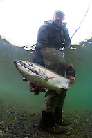 A Happy Angler shows off his catch---silver salmon...Kanektok River..shot in Alaska, USA..