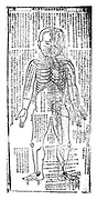 Acupuncture chart for front of the body. 19th century Japanese.  Wood block