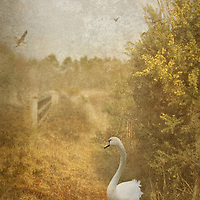 golden country scene with phesants flying and a swan in the foreground