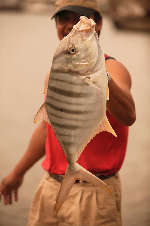Fresh Caught Striped Papio (Jack Trevally) in Honolulu.
