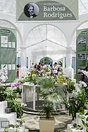 Rio de Janeiro, Botanischer Garten, Jardim Botanico, Orchideario, Orchideen Garten, Barbosa Rodrigues, Brasilien