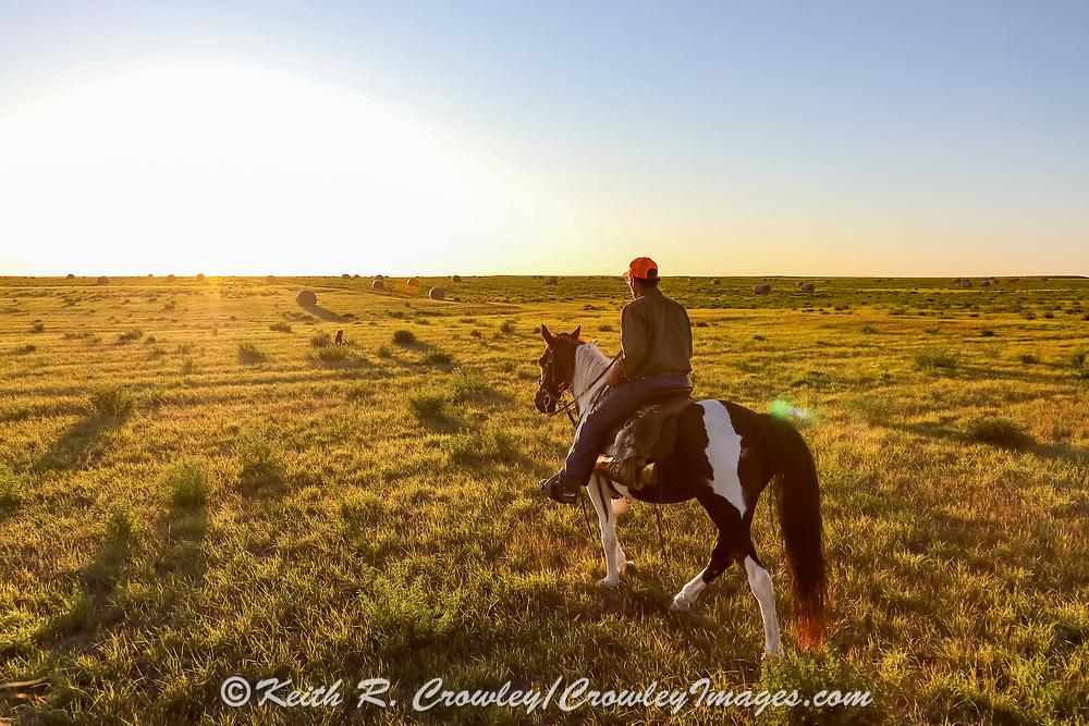 John Zeman follows his German shorthair Louie, inot the sunset during a Montana prairie grouse hunt.