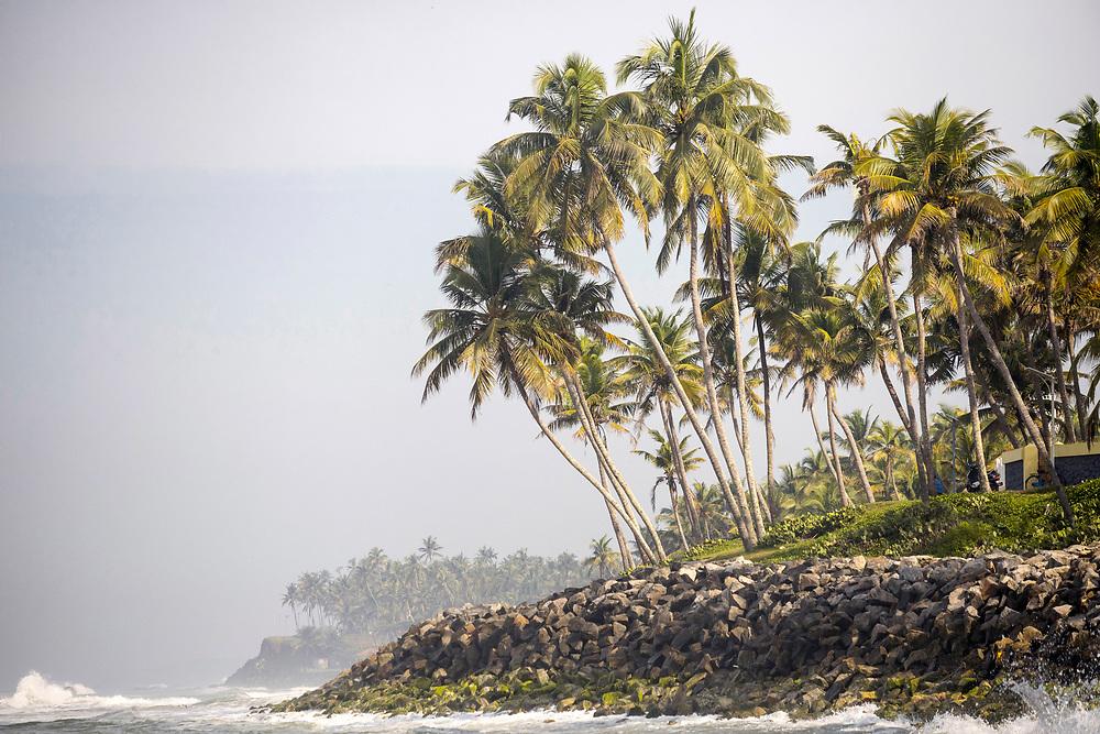 VARKALA, INDIA - 28th September 2019 - Varkala Cliff Beach flora, Kerala, Southern India
