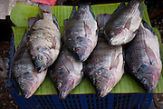 Luang Prabang, Laos. River fish in the morning food market.