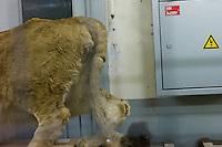 AFrica Museum Tervuren laatste dag van de vakantie met speciale activiteiten.Bezoek aan de opslag kelders mogelijk ihkv de expo UNCENSORED, voor de grote verbouwing van het museum begint. Achterwerk leeuw en electriciteitskast