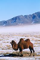 Mongolie. Province d'Ömnögov en hiver. Gobi. // Mongolia. Ömnögov province in winter. Gobi desert.