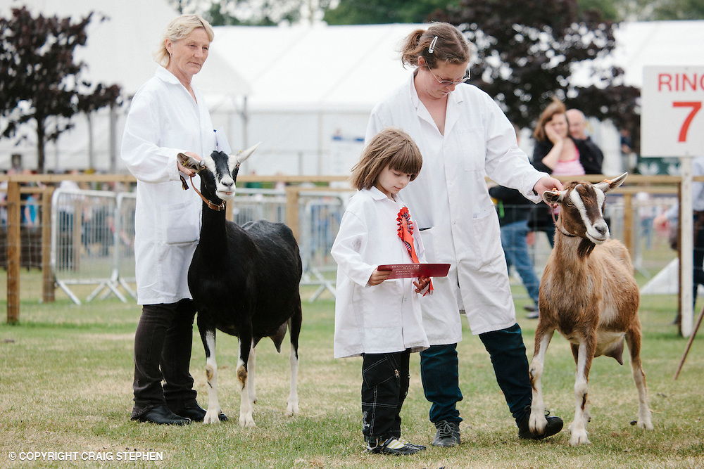 Royal Highland Show 2014. Goats. PAYMENT TO CRAIG STEPHEN 07905 483532