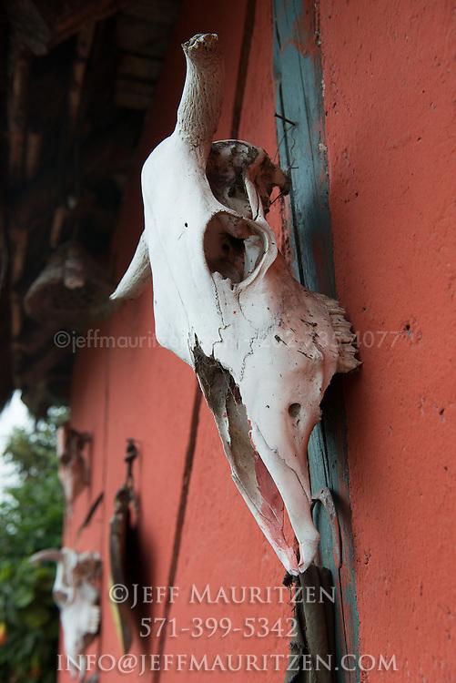 Cow skull on a wall outside a hacienda in Ecuador.