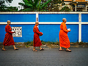 13 JANUARY 2019 - NAKHON PATHOM, THAILAND: DHAMMAVANNA, a female monk at Wat Songdhammakalyani, leads other female monks through the community on their morning alms rounds. The Sangha Supreme Council, Thailand's governing body of Buddhist monks, bans the ordination of female monks, but hundreds of Thai women have gone abroad, mostly to Sri Lanka and India, to be ordained. There are about 270 women monks in Thailand and about 250,000 male monks. There are 7 monks and 6 novices at Wat Songdhammakalyani in Nakhon Pathom. It was the first temple in Thailand to have female monks. The temple opened 60 years ago and has always been a temple of women monks. Women can be ordained as novices in Thailand, but to be ordained as a full monk would require the participation of 10 female monks and 10 male monks, and male monks in Thailand are barred from participating in women's ordination ceremonies.     PHOTO BY JACK KURTZ