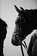 Horses and grooms wait for their riders during the Greenhawk Canadian Championship - Round 1 at The Royal Horse Show. TORONTO, CANADA.  November 4 2016