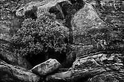 Tree in Rock.