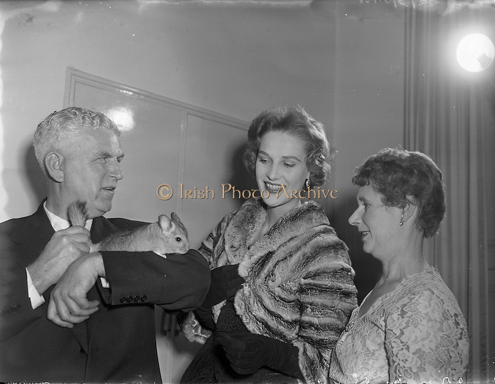 10/10/1958<br /> 10/10/1958<br /> 10 October 1958<br /> Press Conference by Chinchilla Ltd. at the Shelbourne Hotel, Dublin for Domas Ltd