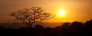 Silhouetted tree, sunset, Tarangire National Park, Tanzania
