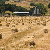 Field with hay packs, Solvang, California, USA
