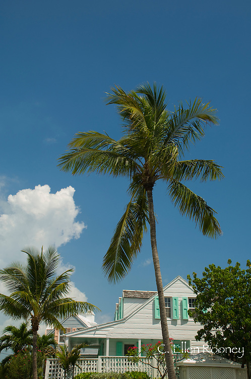 A palm tree growing above a traditional clapboard house in Dunmore Town,<br /> Harbour Island, The Bahamas