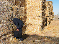 Man with his head stuck in haystack