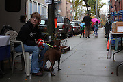 November 17, 2013 - Brooklyn, NY. A Sean Casey Animal Rescue volunteer waits with Hazel the pitbull for potential adopters to stop by the adoption truck. 11/17/2013 Photograph by Nathan Place/NYCity Photo Wire