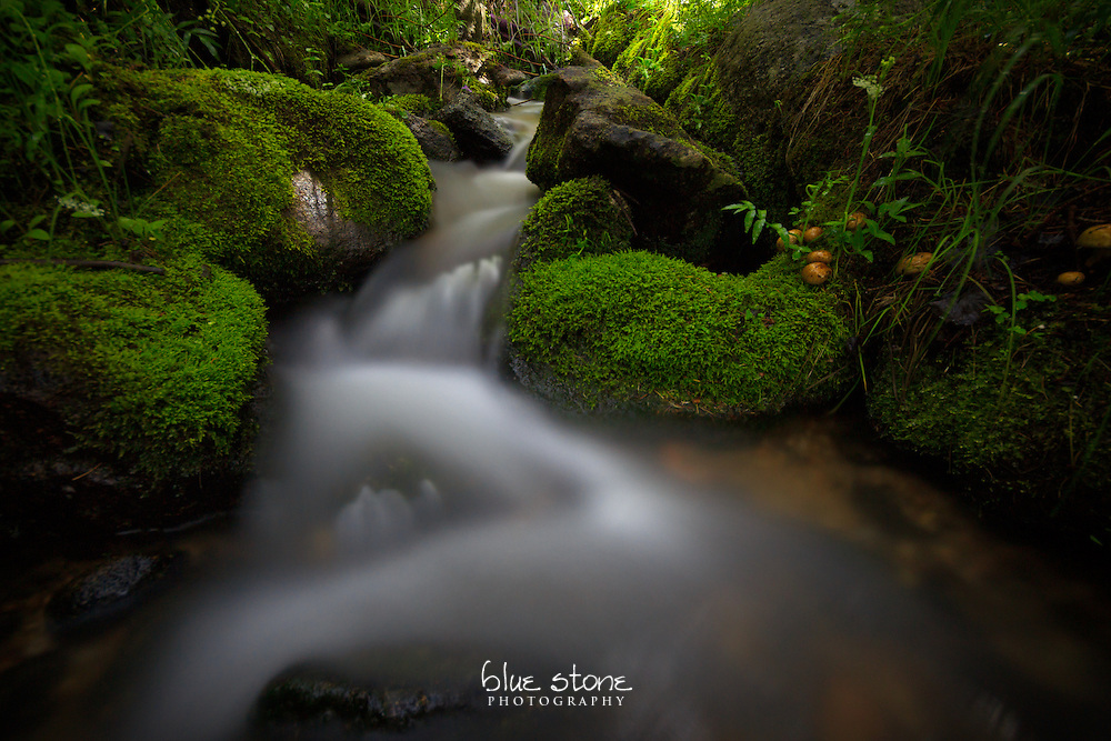 A mountain stream running through a lush green micro-habitat in a high desert forest captivates the imagination.<br /> <br /> Wall art is available in metal, canvas, float wrap and standout. Art prints are available in lustre, glossy, matte and metallic finishes.