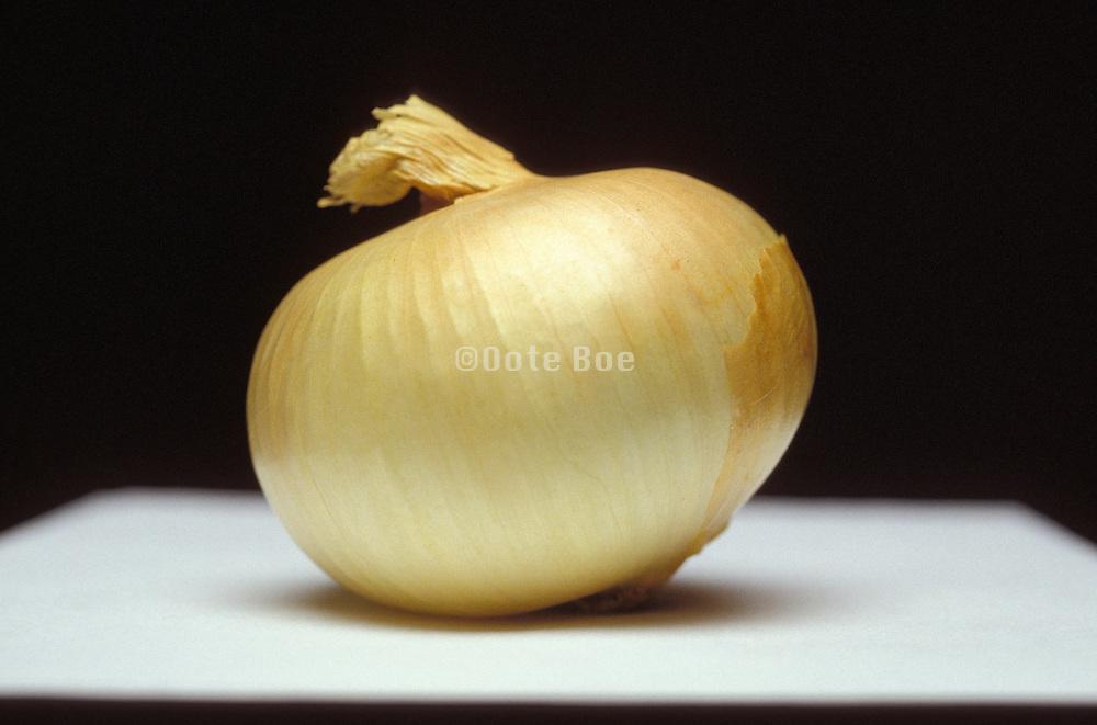 still life of an onion
