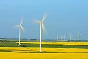 Canola and wind turbines, Altamont, Manitoba, Canada