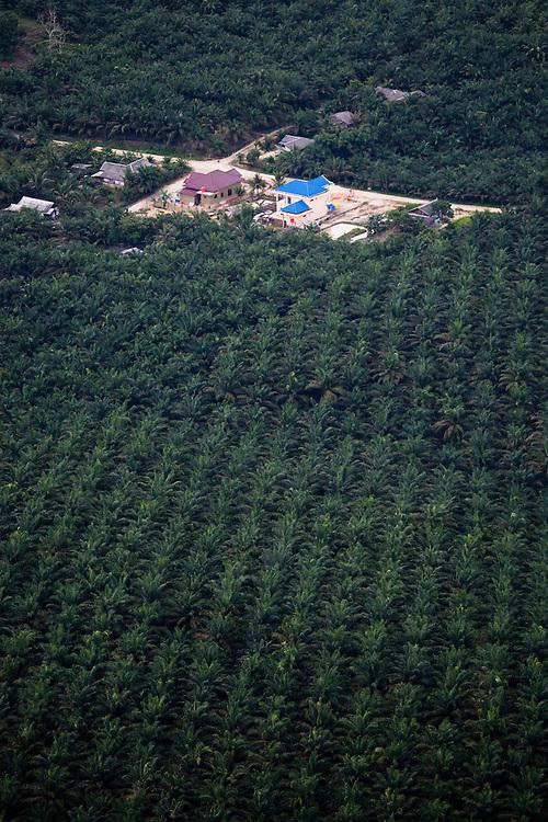Palm plantations (for the production of palm oil)  on the island of Sumatra near Pekanbaru, Riau Indonesia, Aug. 28, 2008..Daniel Beltra/Greenpeace