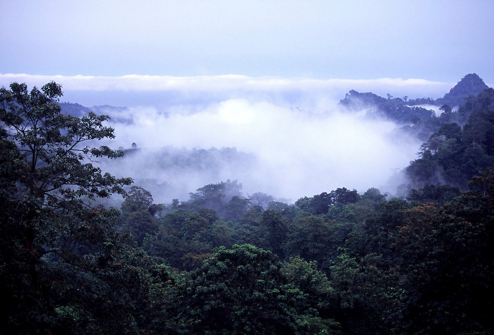 Mist forming in Obo National Park rainforest on the way to Roca Bombaim (Bombay farm).