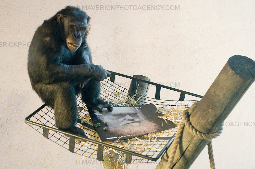 Chimps at Edinburgh Zoo help launch new stamps to celebrate the 200th anniversary of Charles Darwin's Birth.
