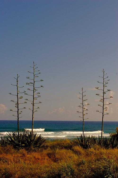 waves,photographie de surf,photographe de surf,surf photos,photography,surf photography,pipe-line Oahu , Hawaii,big wave,surf photos,