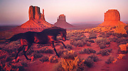 Horse Running in Monument Valley National Park