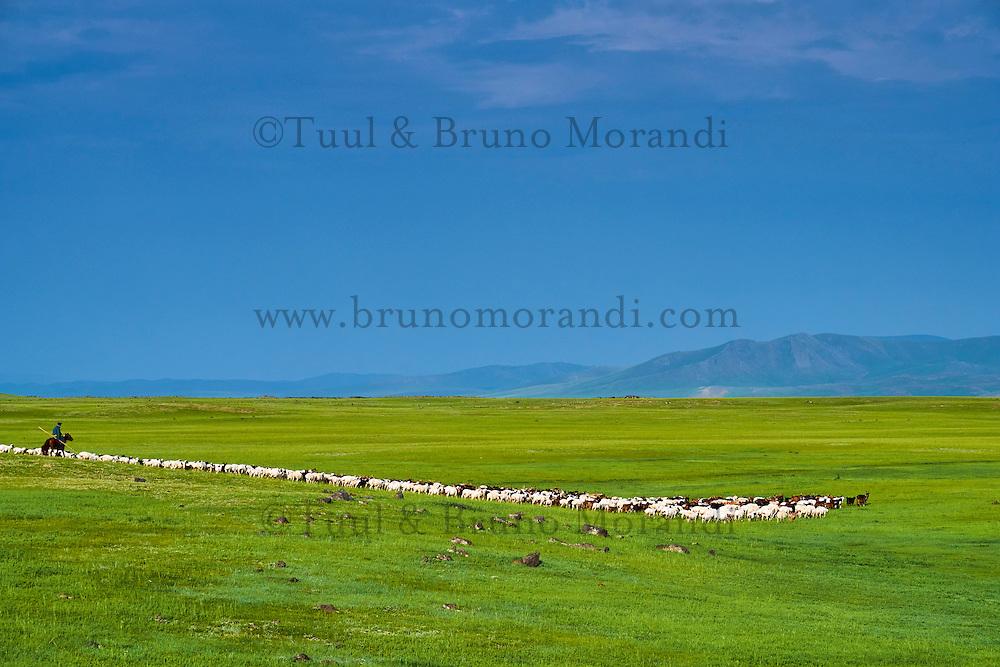 Mongolie, Asie Centrale, Region d'Arkhangai, transhumance, nomadisme // Mongolia, Central Asia, Arkhangai Province, transhumance