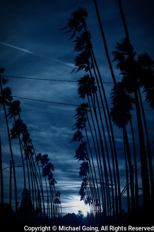 Los Angeles rows of palm trees against twilight blue sky