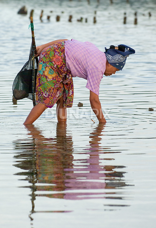 Woman collects nyale sea worms, Lombok, Indonesia