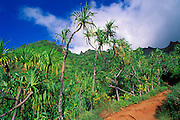 Hala trees and lush tropical hillsides along the Kalalau Trail on the North Shore, Na Pali Coast, Island of Kauai, Hawaii