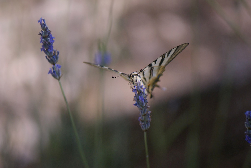 One of a series of nature, landscape and travel photographs, taken by Matthew Butterfield, in and around Corfu, Greece.