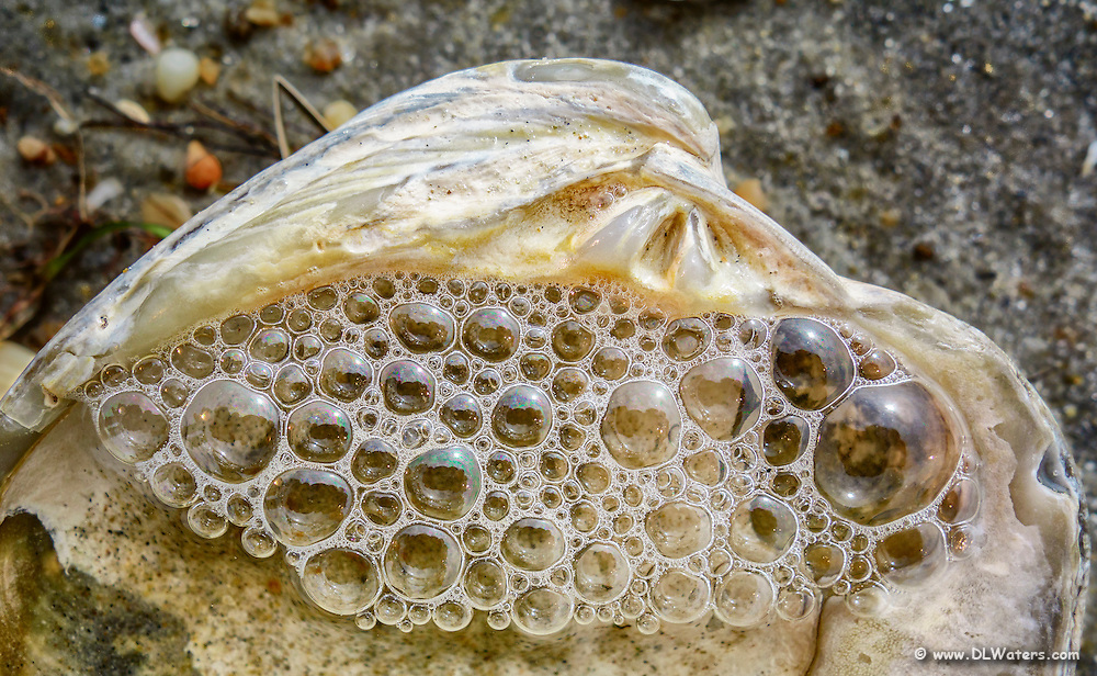 Clam shell filled with bubbles on a Outer Banks beach.