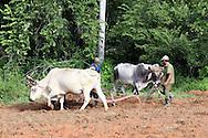 Plowing a field, El Moncada, Pinar del Rio, Cuba.