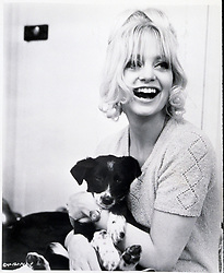 1970, Film Title: THERE'S A GIRL IN MY SOUP, Director: ROY BOULTING, Studio: COLUMBIA, Pictured: ANIMALS (WITH ACTORS), DOG, GOLDIE HAWN, LAUGHING, PUPPY, HAIRSTYLE. (Credit Image: SNAP/ZUMAPRESS.com) (Credit Image: © SNAP/Entertainment Pictures/ZUMAPRESS.com)