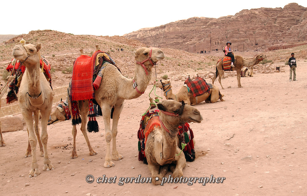 Camels for hire wait for tourists in the ancient city of Petra, Jordan on April 28, 2006. Petra is considered the most famous and gorgeous site in Jordan located about 262 km south of Amman and 133 km north of Aqaba. It is the legacy of the Nabataeans, an industrious Arab people who settled in southern Jordan more than 2000 years ago. Admired then for its refined culture, massive architecture and ingenious complex of dams and water channels, Petra is now a UNESCO world heritage site that enchants visitors from all corners of the globe.